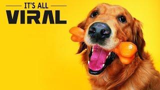 getlinkyoutube.com-10 Human Foods That Can Harm Your Dog