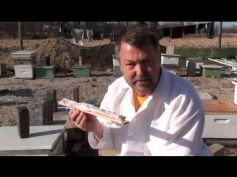 Beekeeping Queen Rearing Part 2   YouTube