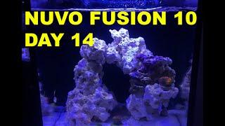 getlinkyoutube.com-Innovative Marine Nuvo Fusion - Day 14