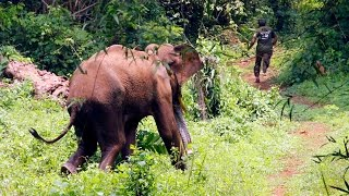 ELEPHANT ATTACK IN  FOREST AT  KERALA