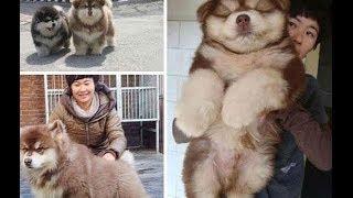 getlinkyoutube.com-24 croisements qui donnent naissance à des chiens hors du commun
