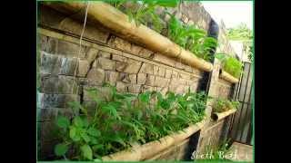 getlinkyoutube.com-Lahan sempit bukan alasan tidak bisa menanam sayur.