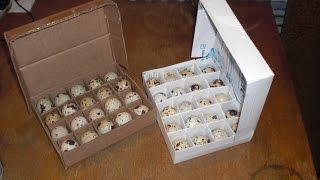 Упаковка для перепелиных яиц своими руками.