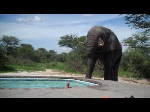 Slon upao na žurku na bazenu...