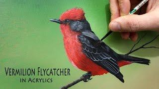 getlinkyoutube.com-Acrylic painting time lapse of a vermilion flycatcher