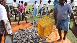 Fresh fish selling near dam