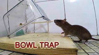 getlinkyoutube.com-bowl mouse trap