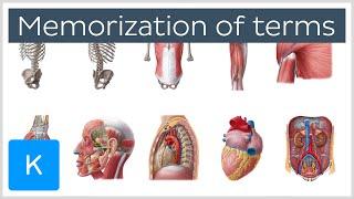 Four steps to memorization of anatomy terms - Human Anatomy |Kenhub