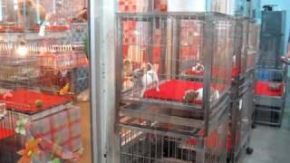 getlinkyoutube.com-سوق الحيوانات بانكوك.MOV