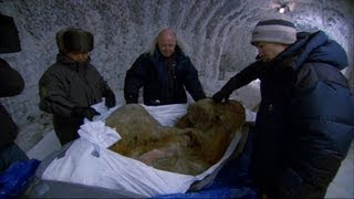 getlinkyoutube.com-The Perfectly Preserved Frozen Yuka Mammoth Mummy - Woolly Mammoth: Secrets from the Ice - BBC Two