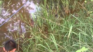 getlinkyoutube.com-ตามหาปลากัดป่า บ้านดุง อุดรธานีpart.1