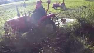 Siromer Topping Reeds,
