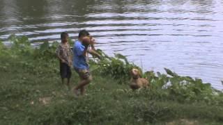 getlinkyoutube.com-เด็กกับหมากัดโหด