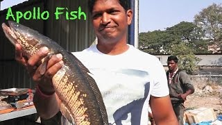 getlinkyoutube.com-How To Cook Boneless Fish - Battered Fish Recipe - Simple Fish Recipes For Two - Apollo Fish indian