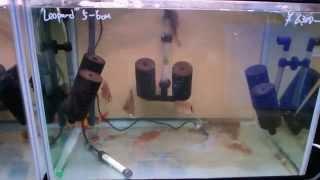 getlinkyoutube.com-スポンジフィルターのメンテ=The maintenance of Sponge filter=