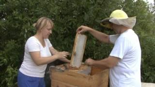 getlinkyoutube.com-Пчеловодство - Латвия