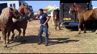 Cai superbi la targul din Saliste
