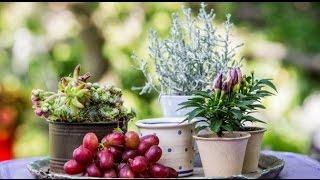 getlinkyoutube.com-Fleur Kreativ - Floristik und Blumen für den Herbst