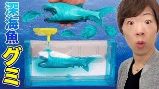 巨大深海魚グミ作ってみた!メガマウスザメ・ダイオウグソクムシ・オウムガイ