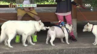 getlinkyoutube.com-TV동물농장 20130707 #1(5)