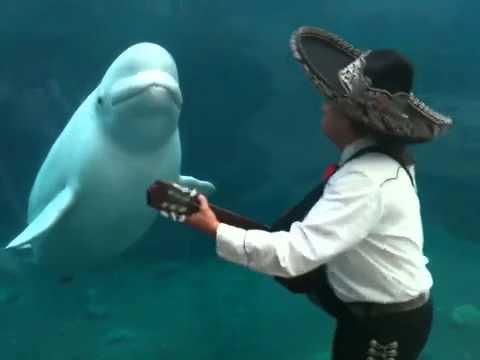 Serenada za belog kita