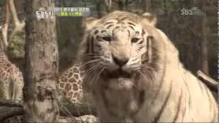 getlinkyoutube.com-TV동물농장 509회 4월24일 다시보기_08