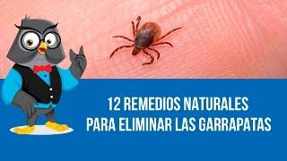 getlinkyoutube.com-12 Remedios Naturales Para Eliminar Las Garrapatas