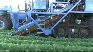 getlinkyoutube.com-ASA-LIFT - SP-200 CFH - Carrot harvester