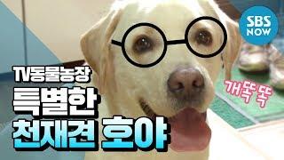 getlinkyoutube.com-SBS [동물농장] - 상상 초월 특별한 천재견 호야
