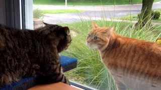 getlinkyoutube.com-Cat fight through the window.