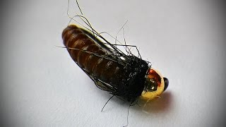 getlinkyoutube.com-Catgut Caddis pupa