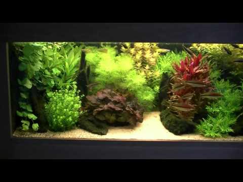Holandské akvárium