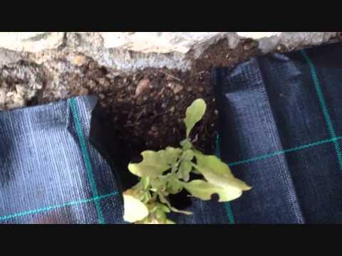 Videos YouTube  Come Costruire Un Portabottiglie Con Un Pallet » EsEmGoldex.COM