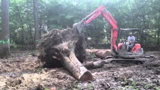 getlinkyoutube.com-Knocking Down a Monster Tree with a Mini Excavator