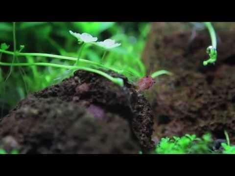 Aqua Amazonia Soil