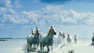 getlinkyoutube.com-Happy birthday song horse