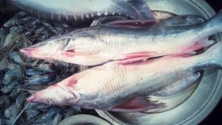 getlinkyoutube.com-Bhairab Bazar Fish Market....wholesale Bangladeshi fish.