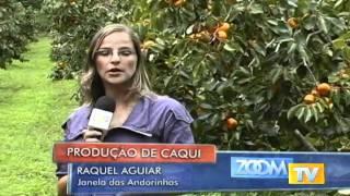 getlinkyoutube.com-PRODUÇÃO DE CAQUI 02-04-10 .avi