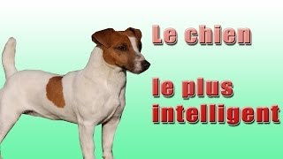 getlinkyoutube.com-Le Chien Le plus Intelligent (the most intelligent dogs) LOOK !