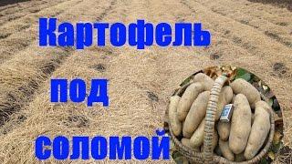 getlinkyoutube.com-Как правильно посадить картофель под солому