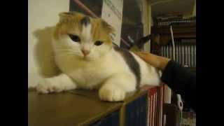 非常愛說話的貓 第1集