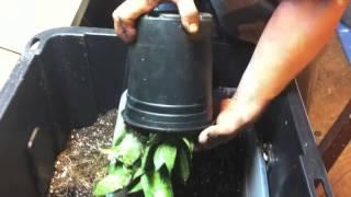 getlinkyoutube.com-Methods of Applying Mycorrhizal Fungi Inoculants to Plant Sytems