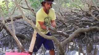 getlinkyoutube.com-how to catch mud crabs using a hook