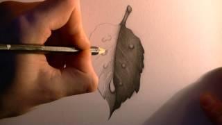 getlinkyoutube.com-Drawing a Leaf with Waterdrops (HD)