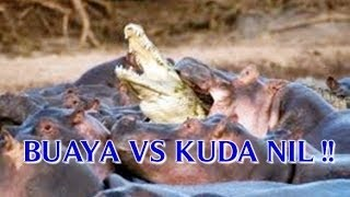 VIDEO BUAYA VS KUDA NIL