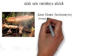 getlinkyoutube.com-Materi Pembelajaran Fungi SMA