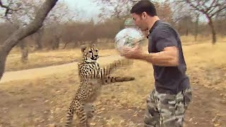 getlinkyoutube.com-Cheetahs Play Football - Deadly 60 - Series 3 - BBC