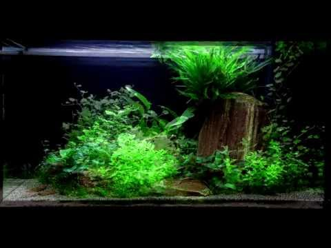 Layout 60 (125L) by Tropica