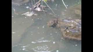 getlinkyoutube.com-Derede Balık Avı