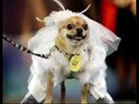 Imágenes de perros. Fotos de perros